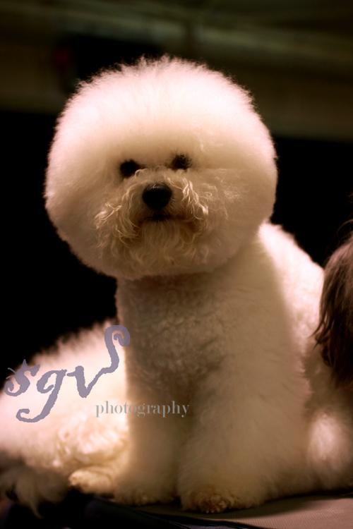 dog_show2_web.jpg