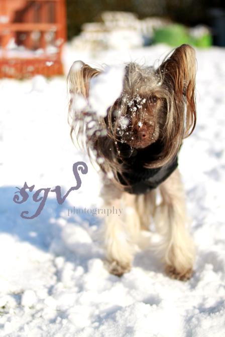 gurk_neige_web.jpg
