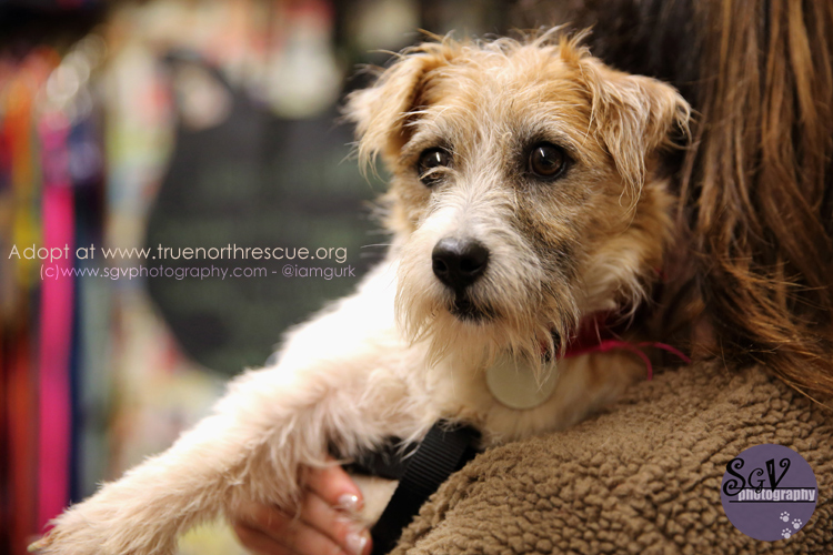 terrier1_web2.jpg