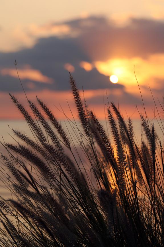 EdJohnston-Sunset-Seagrass-8176w.jpg