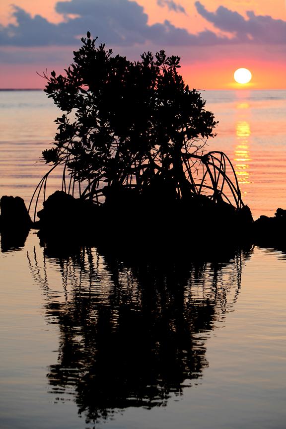 EdJohnston-Sunset-Mangrove-Island-8209w.jpg