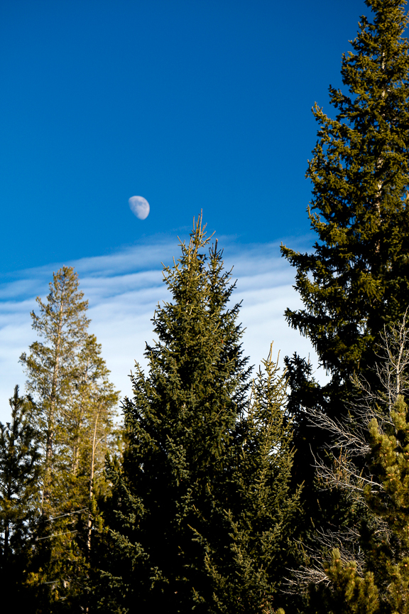 EdJohnston-Colorado-Moon-Over-Trees-4030w.jpg