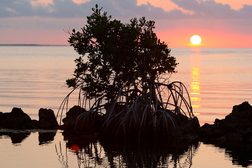 EdJohnston-Mangrove-Sunset-8212w.jpg