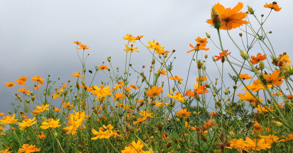 Even with stormy skies - flowers still bloom and bees still find the nectar!