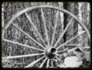Wagon Wheel 2.jpg