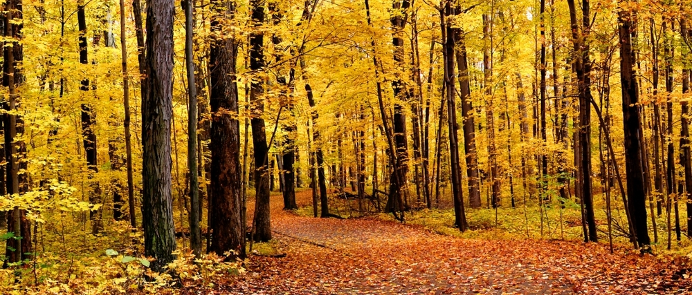 golden-forest-goolgeplus.png