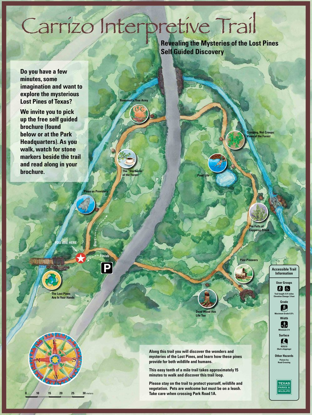 Bastrop State Park Carrizo Trail Map