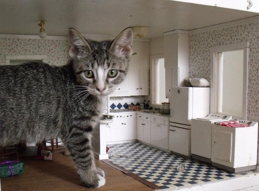 Cat Dollhouse 2.JPG