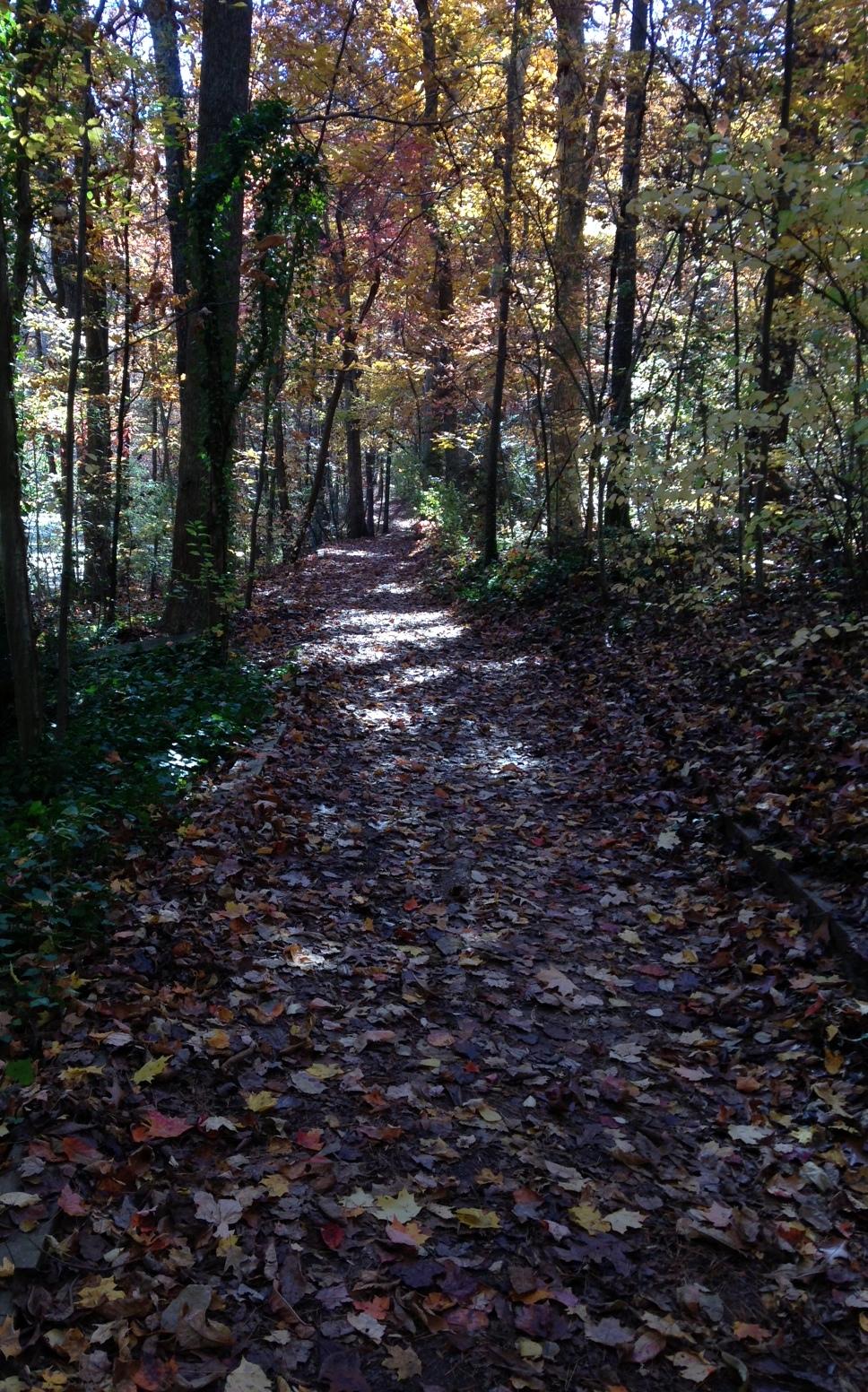 reynolda path.jpg