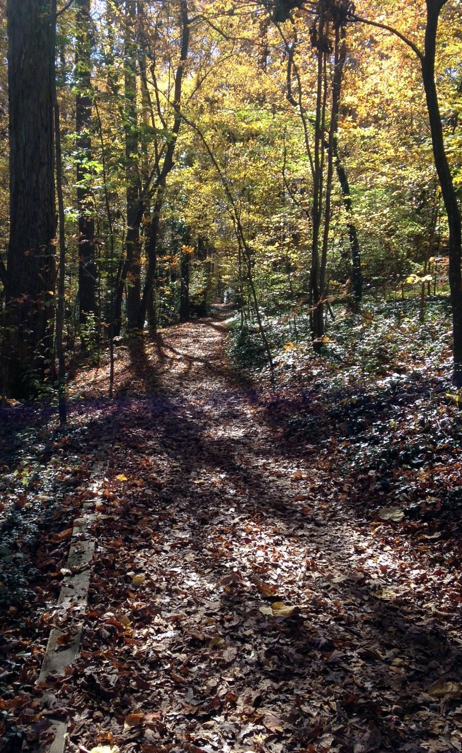 reynolda path2.jpg