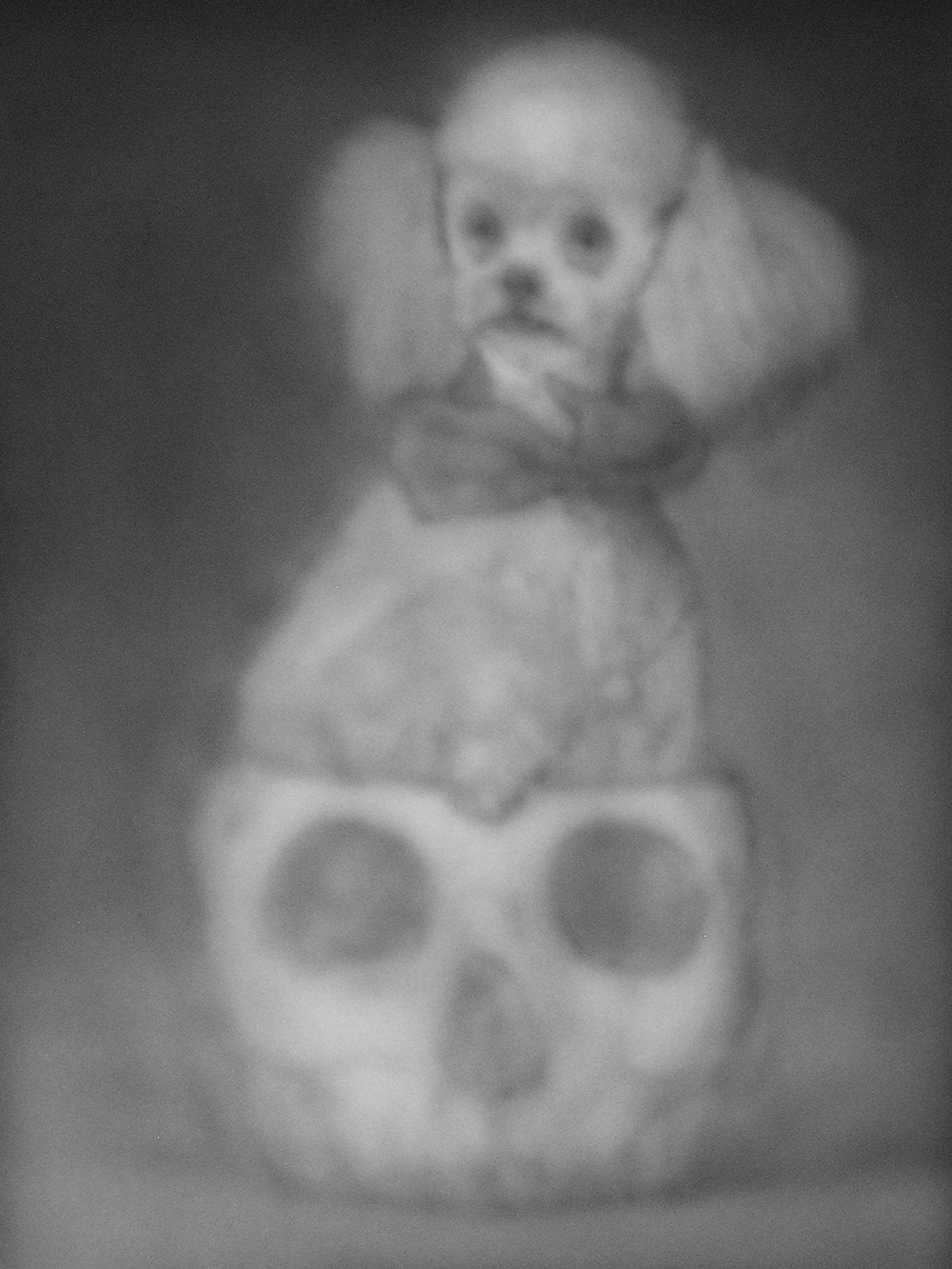 Poodle Seated in a Skull