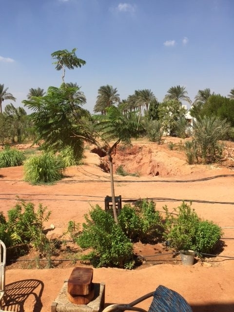 Dalia's organic farm outside Cairo