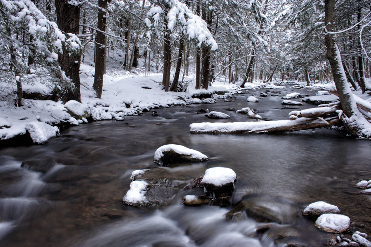 Hemlock Creek, Allegheny NF Winter