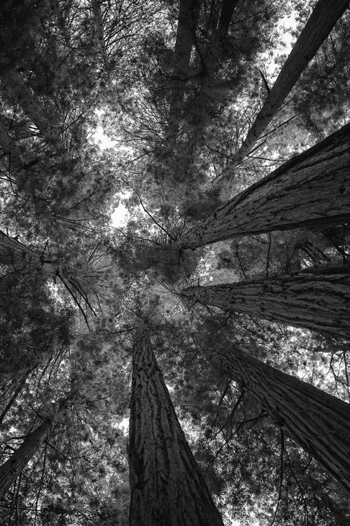 Tree-splosion!