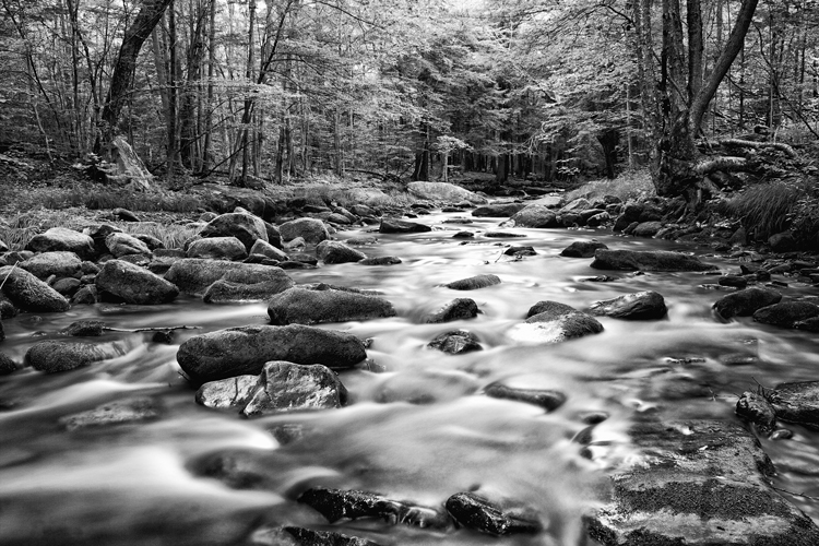 Hemlock Creek, Allegheny National Forest, Warren, PA