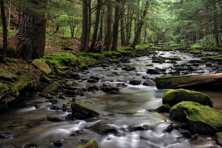 Hemlock Creek, Allegheny NF