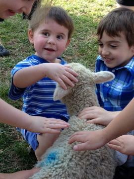 lamb photo.jpg