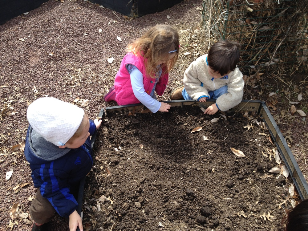 Cleaning out and planting seeds in our garden plot