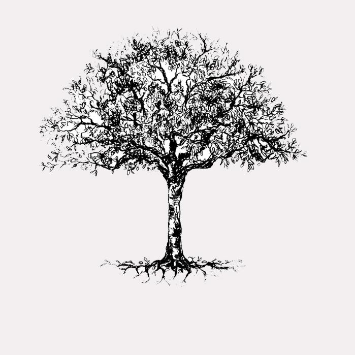 tree 3002 ss.jpg