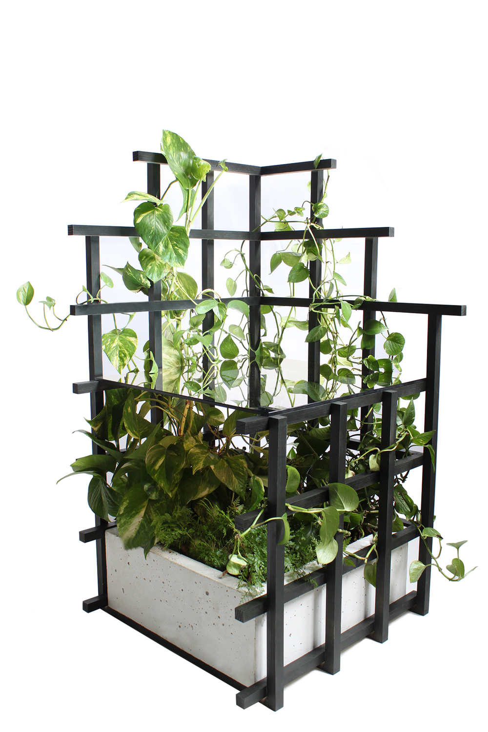"TRELLIS SIDE TABLE CLEAR PINE, ONE WAY MIRROR, CONCRETE, PLANTS 18"" x 18"" x 36"""