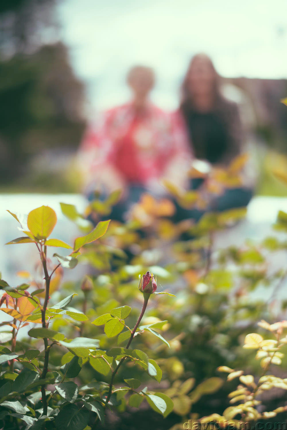 Stratford-Lifestyle-Photography-Photographer-020.jpg