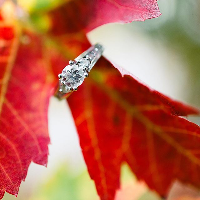 A good looking time of year. How red is this leaf? Just had to give this a try. #helloreverie #davidiam #weddingphotographer #engagementring #mapleleaf #fall🍁 #colourpop #weddingphotoideas #weddingphotoinspiration #stratfordweddingphotographer #bling #popofcolor #bokeh #macro #ringshot #instagood #besttimeoftheyear #saturated #depthoffield #nikon #d800 #ceative #classic #ilovemyjob #jewelry