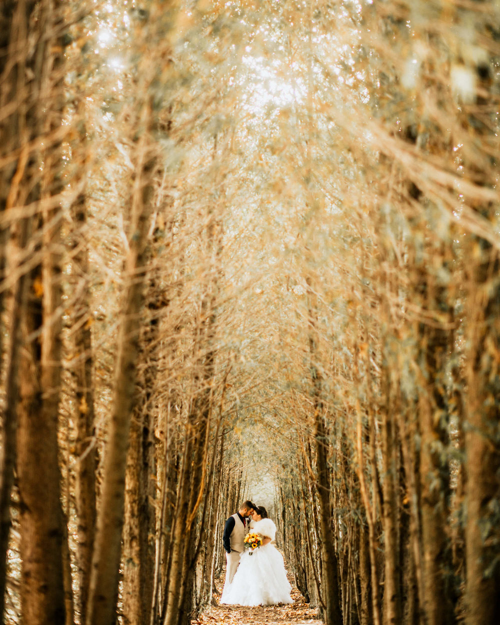 tree-lined-cedar-tunnel-cranberry-creek-gardens-001.jpg