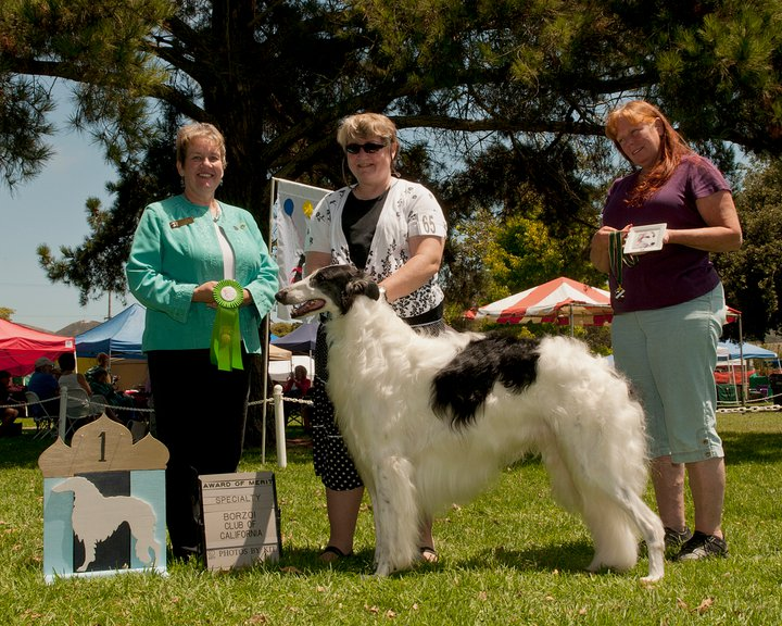 GCH Skyline Black Tie Affair O'Rey.jpg