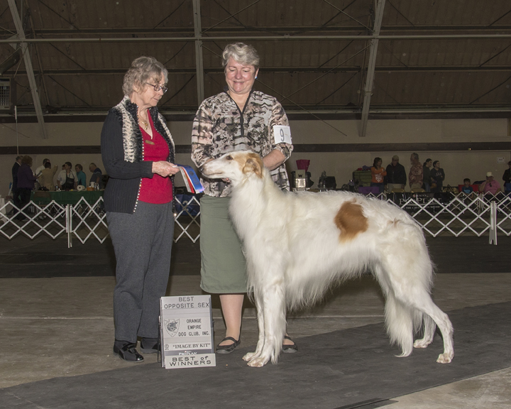 Orange Empire Dog Club, 1-25-14, Judge Valerie Stokes.  WD, BW, and BOS for 2 points..jpg