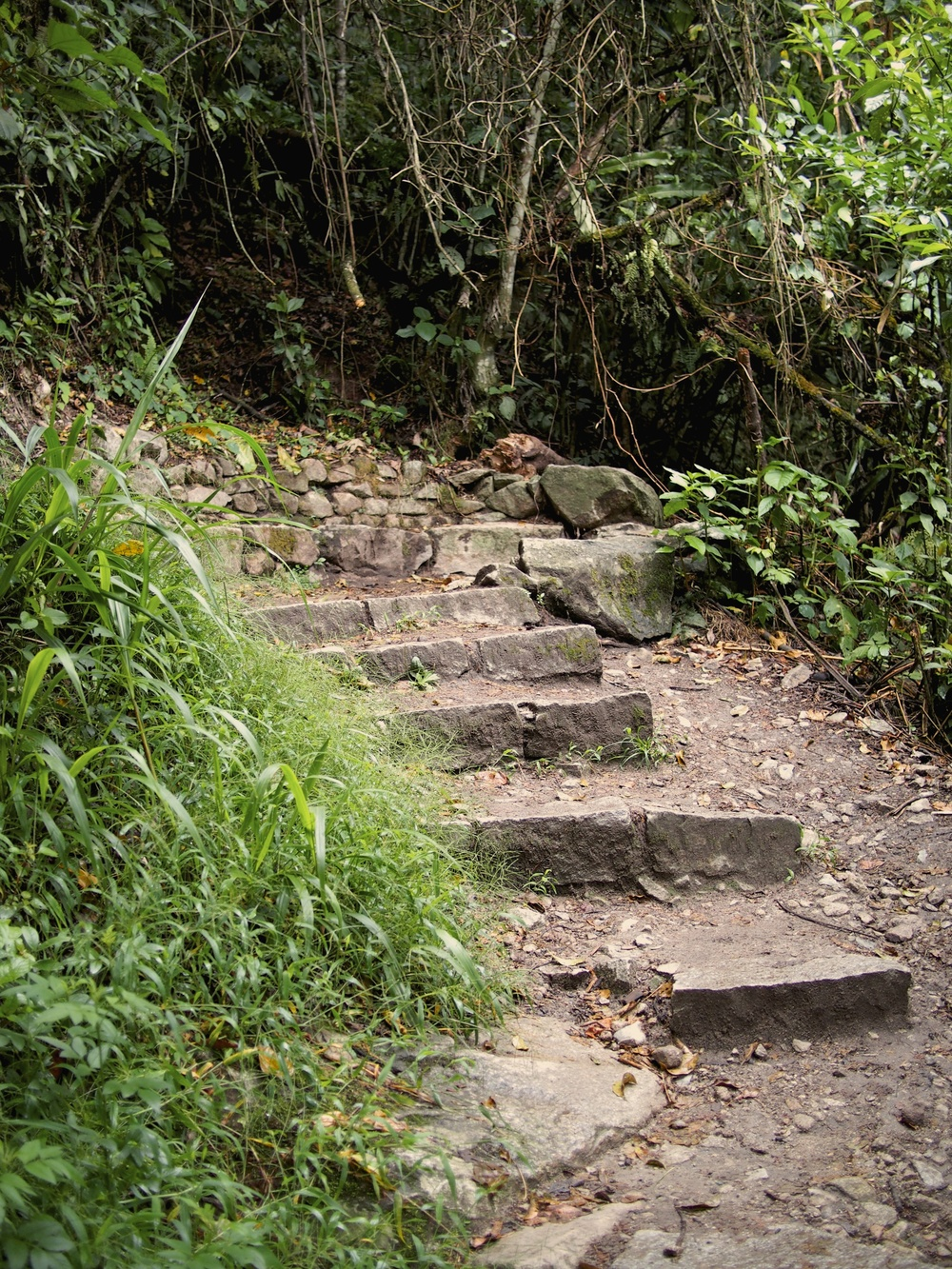 Where it all begins... up the Inca steps to Machu Picchu. We climbed these at 5 am in the rain (picture taken on the way down)