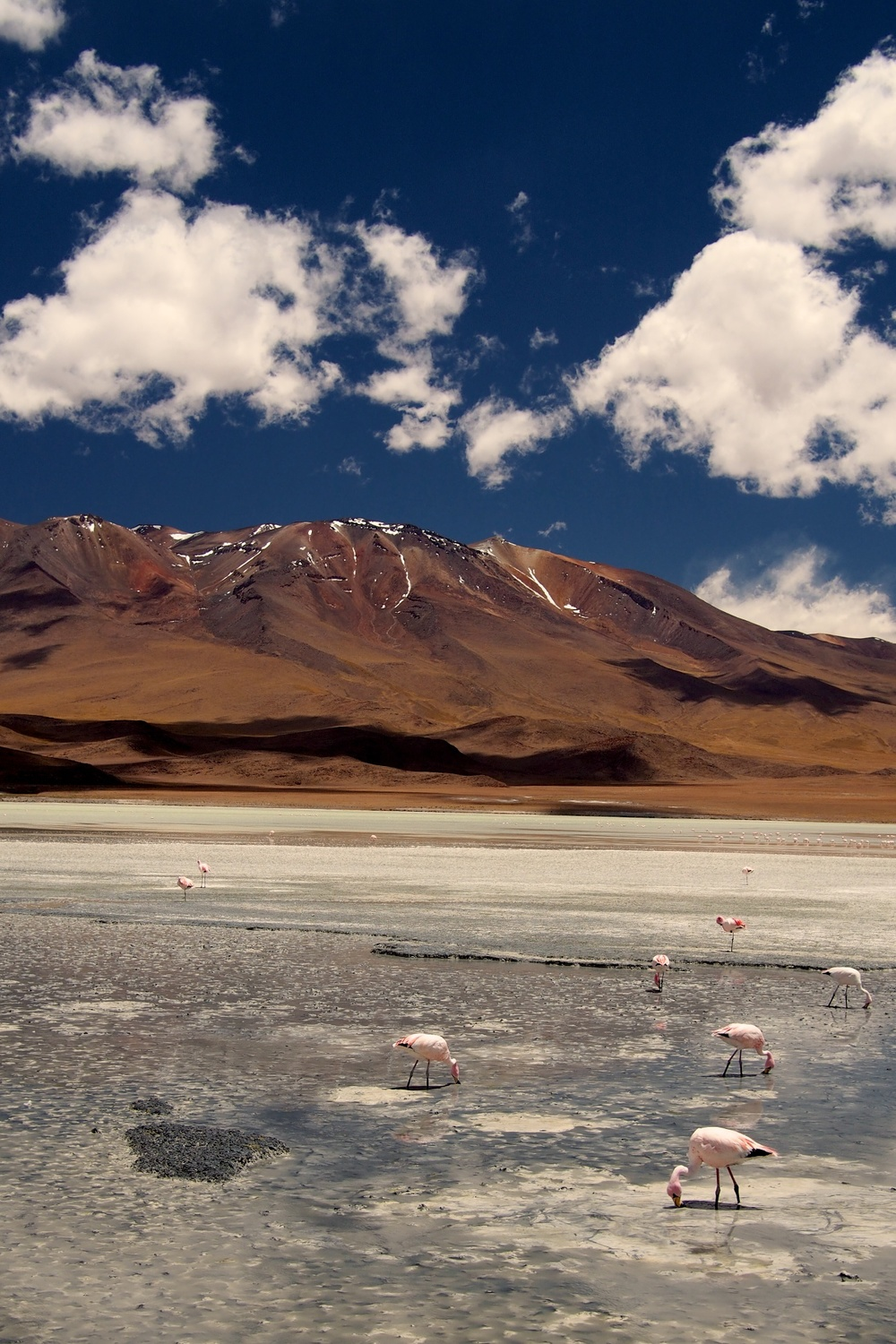 Flamingos on Laguna Cañapa