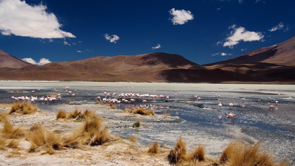 More Flamingos on Laguna Cañapa