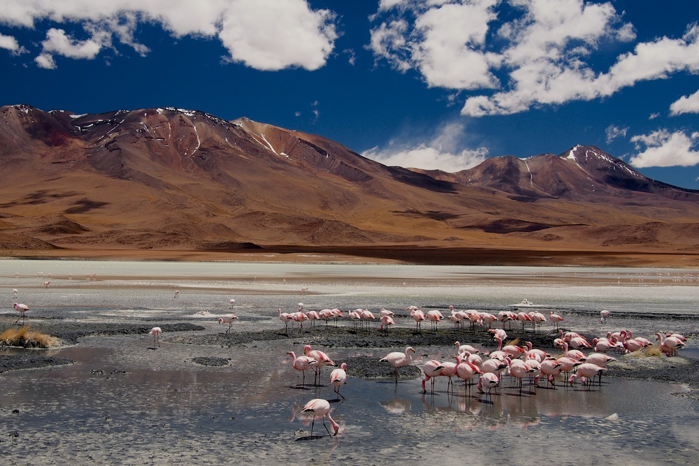 I told you there were Flamingos on Laguna Cañapa, right?