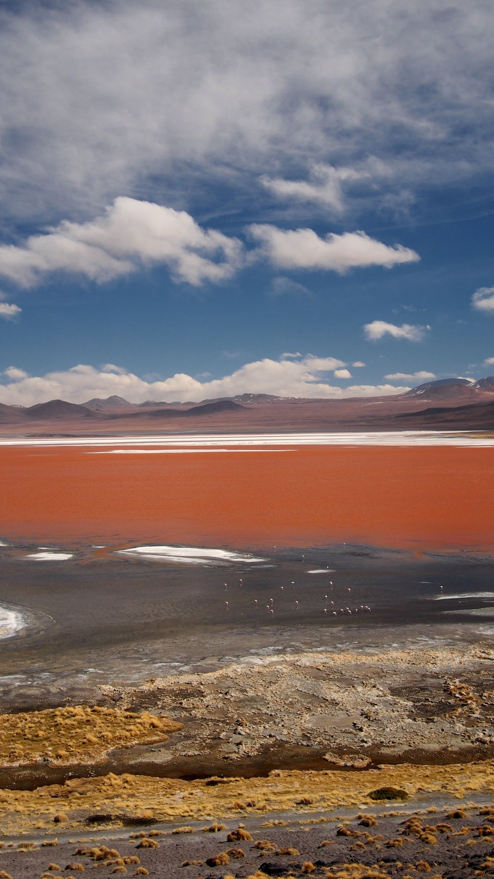 The Laguna Colorada is the main nesting site of the three species of Andean flamingos: Chilean Flamingo, Andean Flamingo and James's Flamingo