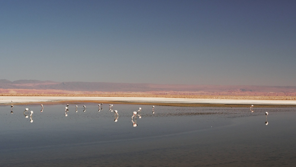 Flamingos on Salar de Atacama