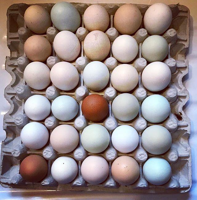 egg-spo  #stillsforthrills