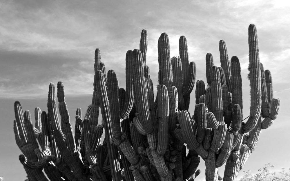 cactussy.jpg
