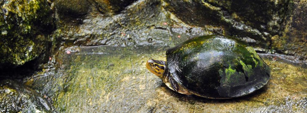 kuala_lumpur_turtle.jpg