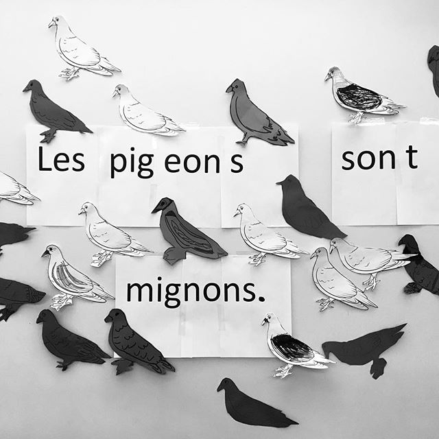 #les pigeons sont migons #fiaf #frenchclass #pigeons #mignons