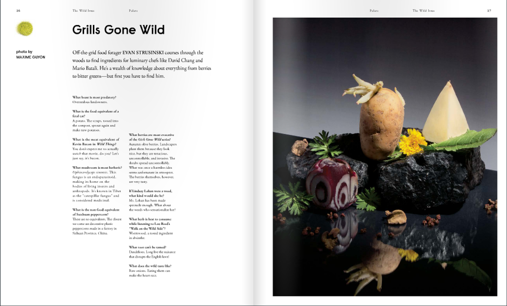 wild_issue_04.png