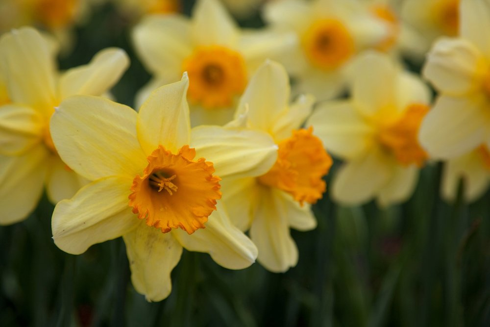 Blooms-40.jpg