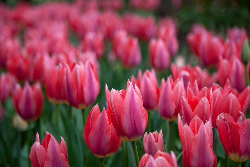 Blooms-68.jpg