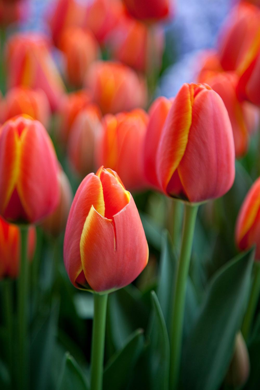 Blooms-97.jpg