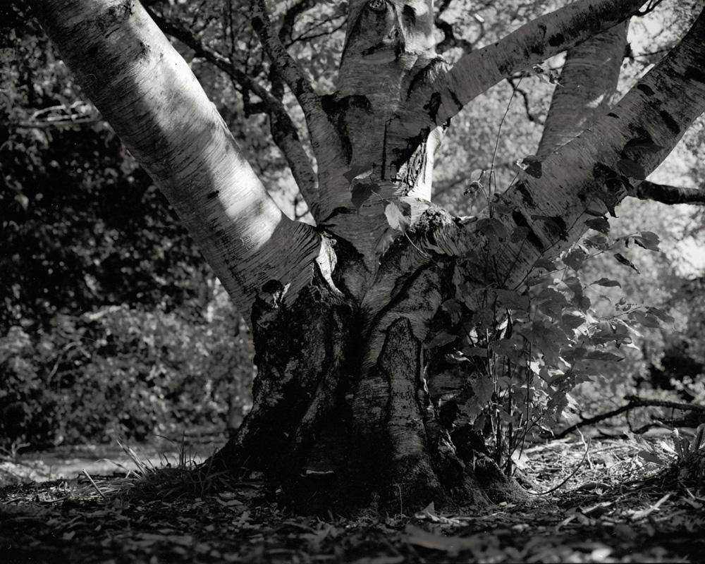 Arboretum_001.jpg
