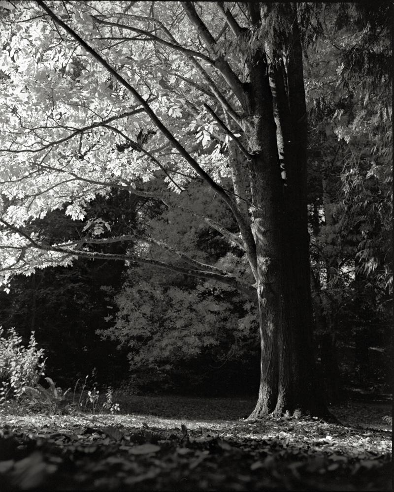 Arboretum_007.jpg
