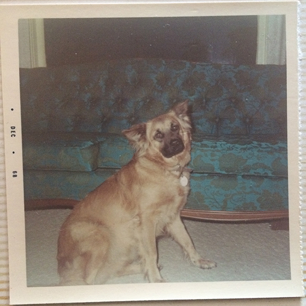 my dog, Bandit, posing next to the couch when I was just a baby.