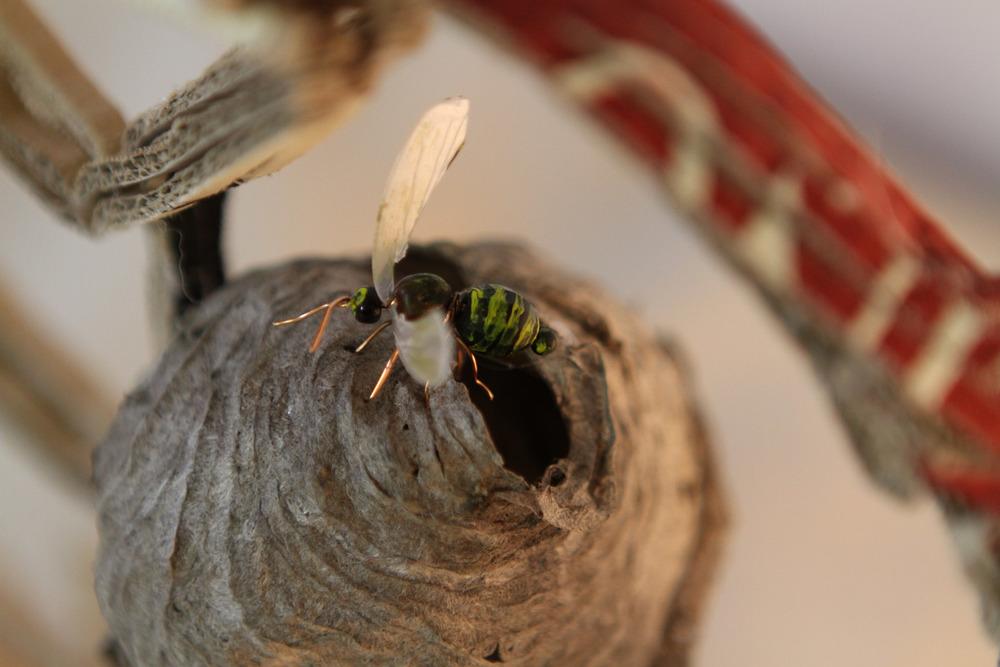 P13_Queen Bee (3).jpg