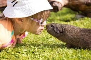 child-guinea-pig-friendship-sweet-smooth-hair.jpg