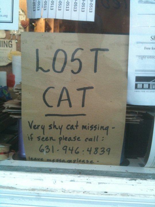 lost cat.jpg