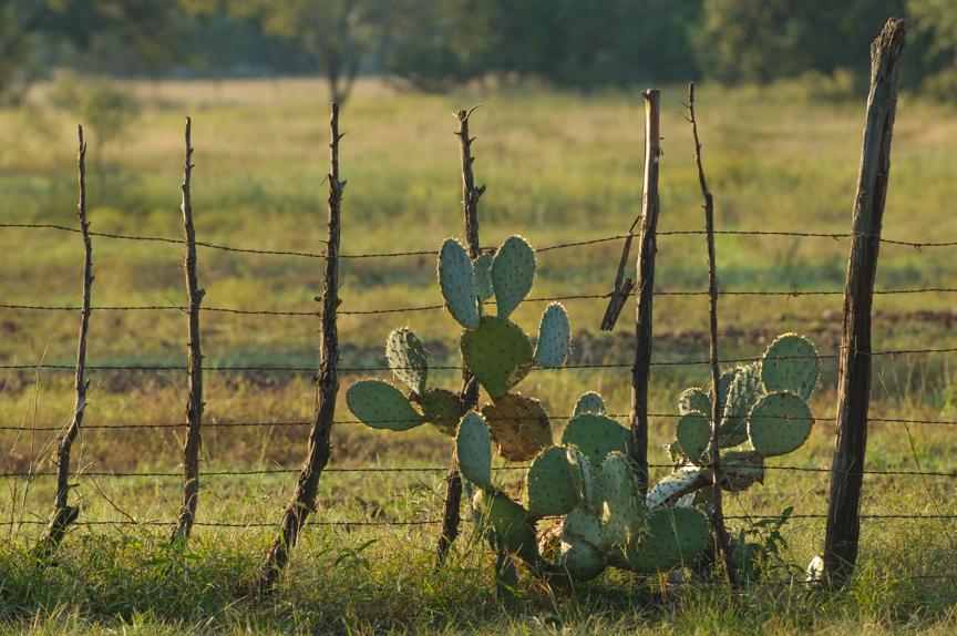 20131026_ranch_cactus.jpg